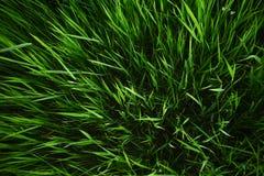 Fondo dell'erba di estate fotografia stock