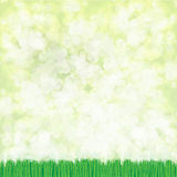 Fondo dell'erba di vettore Fotografia Stock