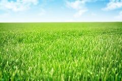 Fondo dell'erba e del cielo fotografie stock libere da diritti