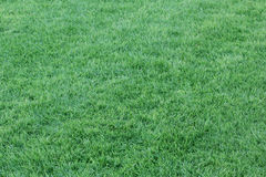 Fondo dell'erba verde - 1° settembre 2017 Fotografia Stock