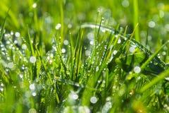 Fondo dell'erba verde Fotografia Stock Libera da Diritti