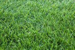 Fondo dell'erba verde fotografia stock