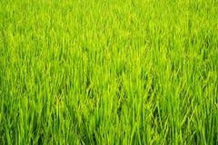 Fondo dell'erba verde Immagini Stock