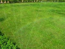 Fondo dell'erba verde Fotografie Stock