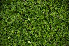 Fondo dell'erba verde, angolo di scenetta Immagini Stock