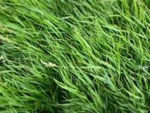 Fondo dell'erba verde della molla fresca fotografia stock