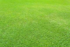 Fondo dell'erba verde della natura Immagini Stock Libere da Diritti