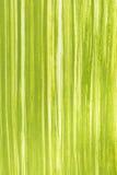 Fondo dell'erba verde della primavera dipinto con la gouache Immagini Stock
