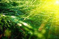 Fondo dell'erba verde, vista luminosa tonificata del primo piano dell'erba con i fasci del sole e chiarore della lente immagini stock