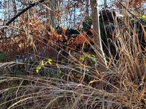 Fondo dell'estratto della foresta di autunno immagine stock libera da diritti