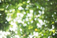 Fondo dell'estratto della sfuocatura degli alberi Immagini Stock Libere da Diritti
