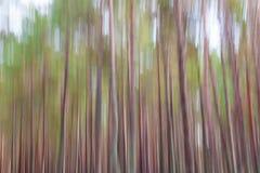 Fondo dell'estratto della sfuocatura della foresta Fotografia Stock Libera da Diritti