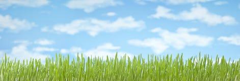 Fondo dell'insegna del cielo dell'erba Fotografia Stock Libera da Diritti
