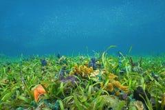 Fondo dell'oceano con l'erba del mare e le spugne variopinte Fotografia Stock Libera da Diritti