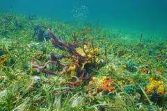 Fondo dell'oceano con le spugne variopinte del mare Immagini Stock Libere da Diritti