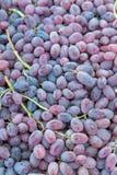 Fondo dell'uva del vino rosso fotografia stock libera da diritti