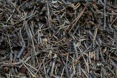 Fondo della casa della formica Fotografie Stock