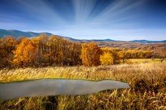 Fondo della collina/paesaggio dell'erba di giallo dell'albero della montagna Fotografia Stock Libera da Diritti
