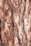 Fondo della corteccia dell'abete Legno naturale Chiuda su struttura della corteccia indietro Fotografia Stock Libera da Diritti