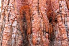 Fondo della corteccia di albero Immagine Stock Libera da Diritti