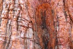 Fondo della corteccia di albero Fotografie Stock