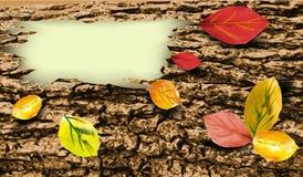 Fondo della corteccia di albero con permesso di autunno variopinto Immagine Stock Libera da Diritti