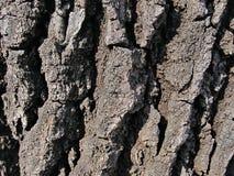 Fondo della corteccia di albero fotografia stock