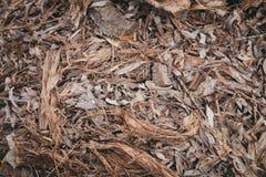 Fondo della corteccia e delle foglie Immagine Stock