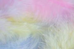 Fondo della fine sull'immagine delle piume pastelli Fotografie Stock