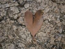 Fondo della foglia dell'albero di gomma del cuore Fotografia Stock