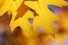 Fondo della foglia di autunno - foto di riserva Fotografia Stock Libera da Diritti