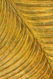 Fondo della foglia di oro Fotografia Stock