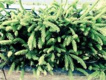 Fondo della foglia verde Fotografia Stock