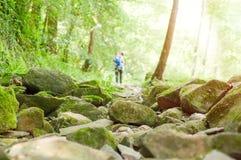 Fondo della foresta con la gente che cammina attraverso la foresta, con la a Fotografia Stock Libera da Diritti