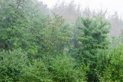 Fondo della foresta decidua durante la pioggia fotografie stock
