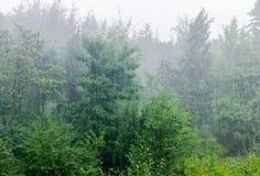 Fondo della foresta decidua durante la pioggia immagine stock libera da diritti