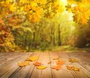 Fondo della foresta di autunno Immagini Stock Libere da Diritti
