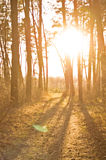 Fondo della foresta di autunno Fotografie Stock