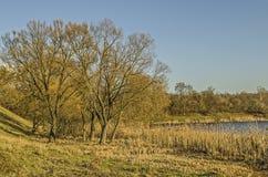Fondo della foresta di autunno Fotografia Stock Libera da Diritti