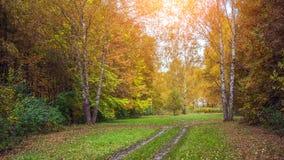 Fondo della foresta di autunno bello, parco in foglie luminose Fotografia Stock Libera da Diritti