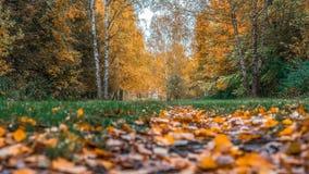 Fondo della foresta di autunno bello, parco in foglie luminose Strada nel legno nel pomeriggio Natura verde ed arancio Immagini Stock