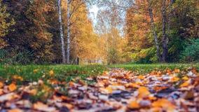 Fondo della foresta di autunno bello, parco in foglie luminose Strada nel legno nel pomeriggio Natura verde ed arancio Fotografia Stock Libera da Diritti