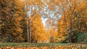 Fondo della foresta di autunno bello, parco in foglie luminose Strada nella foresta su un pomeriggio soleggiato Verde ed arancio Immagine Stock Libera da Diritti