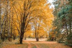 Fondo della foresta di autunno bello, parco in foglie luminose Strada nella foresta su un pomeriggio soleggiato Verde ed arancio Fotografia Stock Libera da Diritti