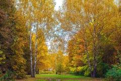 Fondo della foresta di autunno bello, parco in foglie luminose Strada nella foresta su un pomeriggio soleggiato Verde ed arancio Immagine Stock
