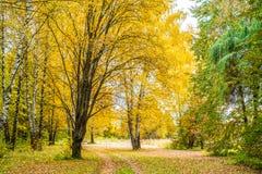 Fondo della foresta di autunno il bello, parcheggia le foglie luminose Strada nella foresta su un pomeriggio soleggiato Verde ed  Fotografie Stock