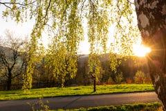 Fondo della foresta di autunno Natura di autunno della foresta Paesaggio soleggiato di autunno della foresta - alberi di giallo d Fotografia Stock