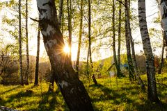 Fondo della foresta di autunno Natura di autunno della foresta Paesaggio soleggiato di autunno della foresta - alberi di giallo d Immagini Stock
