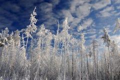 Fondo della foresta di inverno Fotografia Stock Libera da Diritti