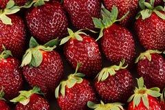 Fondo della fragola di intere fragole Fragole mature variopinte Priorità bassa della frutta Fragola senza giunte Primavera, BAC d Immagine Stock Libera da Diritti